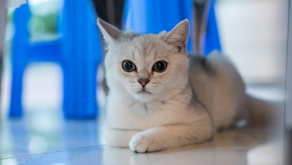 Los primeros años del gato