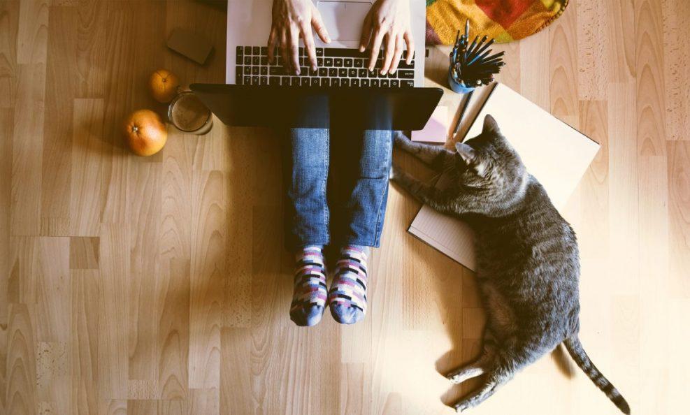 El vínculo con el gato