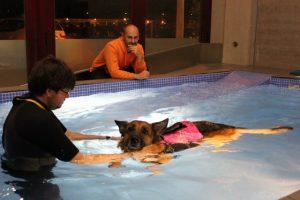 Hidroterapia_Vetsia