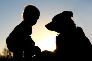 the silhouette of a young child playing outside at sunset with his large German Shepherd dog, giving him a toy ball.