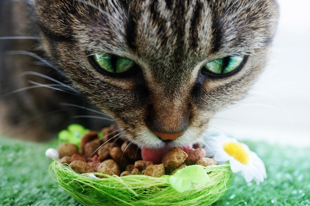 Tiene el hígado mal ¿cómo lo alimentas?