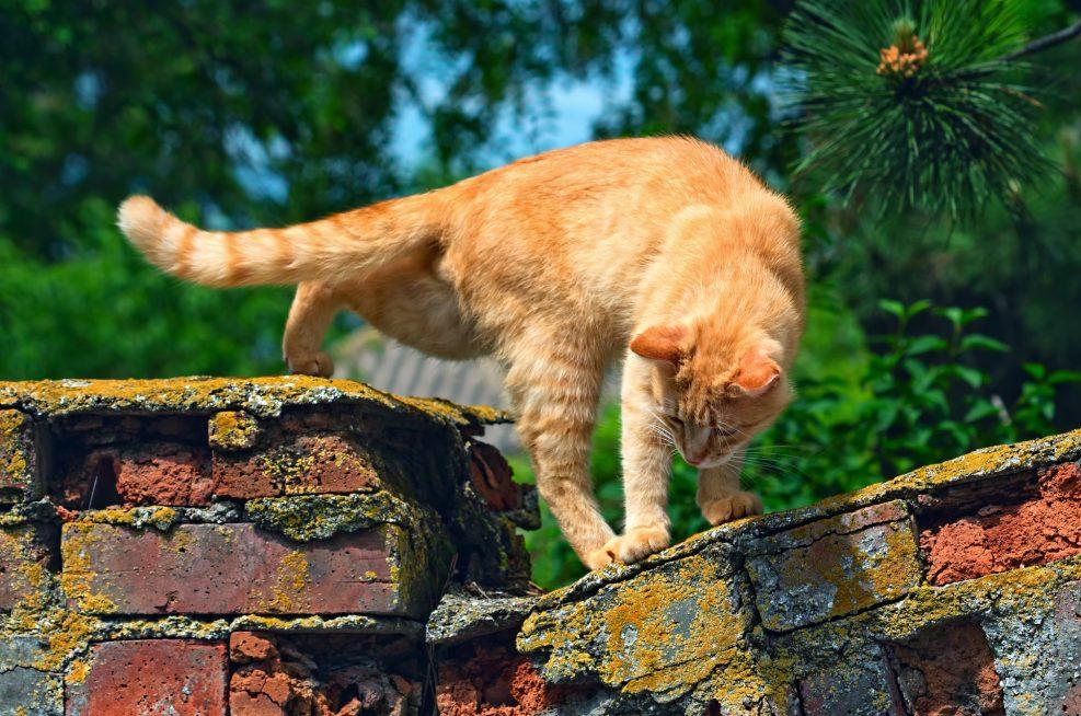 Gato doméstico con vida libre ¿qué necesita?