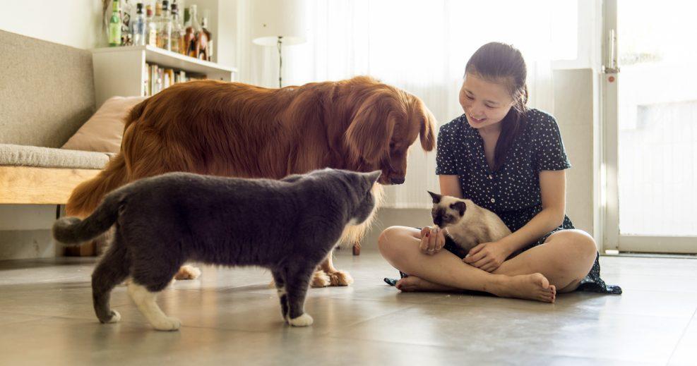 Tópicos típicos sobre los perros