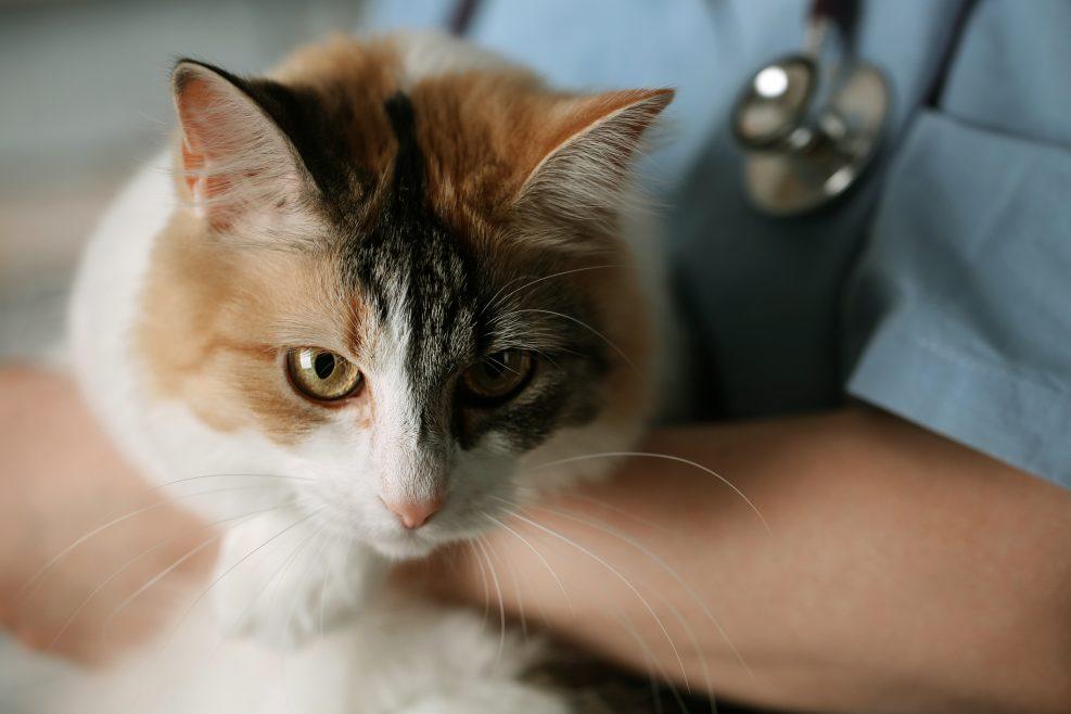 La visita al veterinario