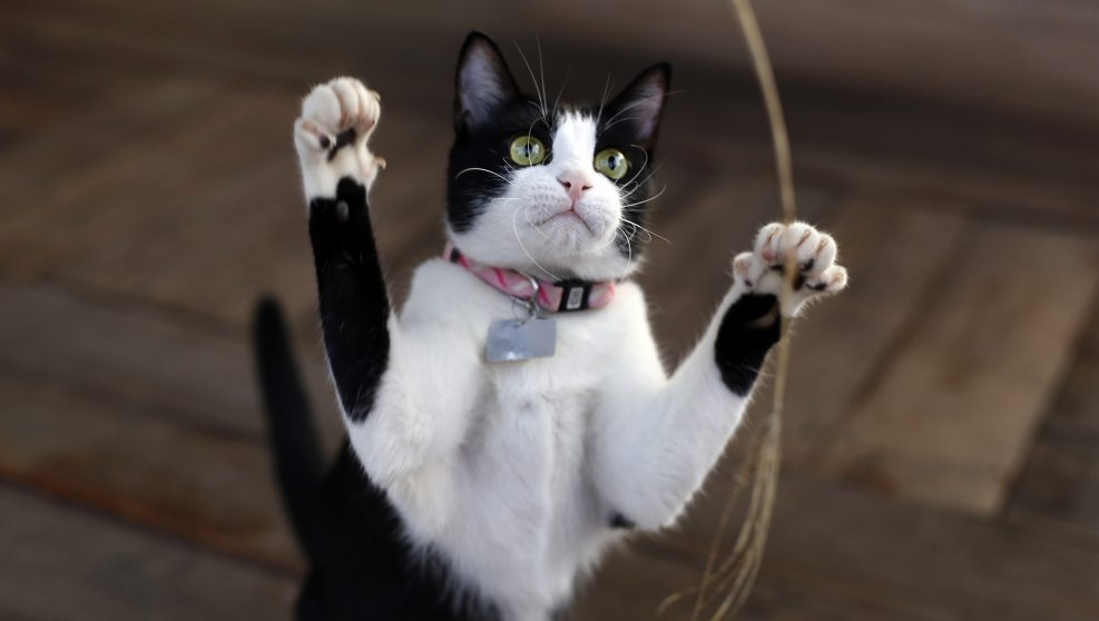 Estímulos para el gato indoor