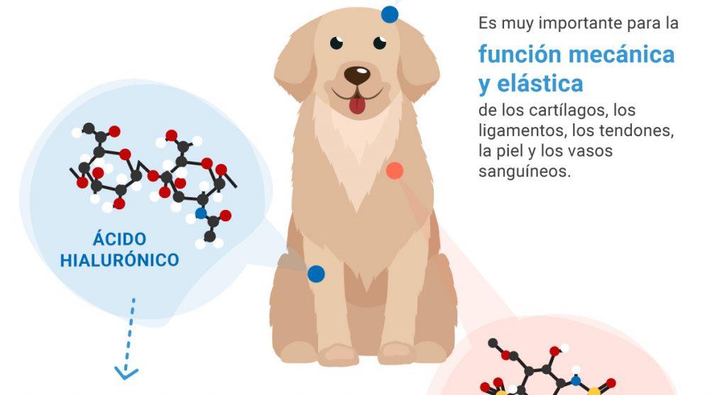 infografia-glicosaminoglicanos-03 rct