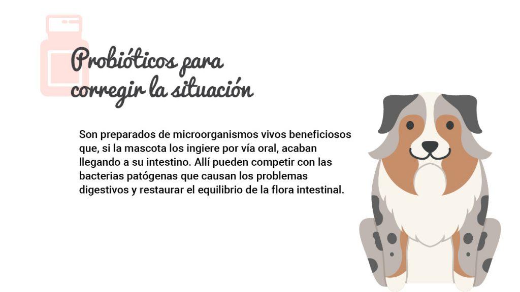 infografia-probioticos-02_R_2