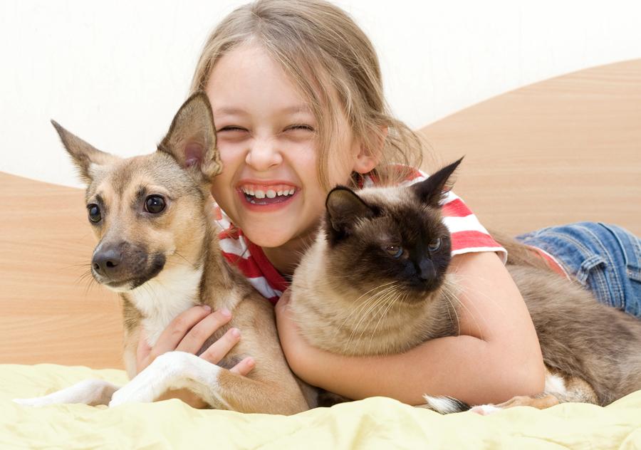El 26% de los hogares españoles tienen perro y en el 19% hay algún gato