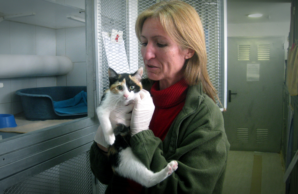 """""""Adoptar a un gato solo puede aportar felicidad y más calidad a nuestra vida"""""""