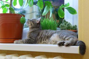 Gato-plantas