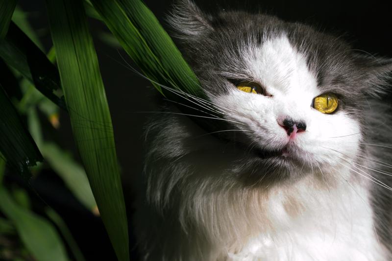 Gato-plantas-casa