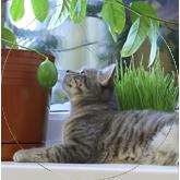 Gatos_Plantas