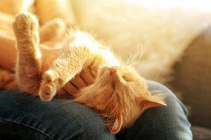 Curiosidades-Personalidad-Gatos