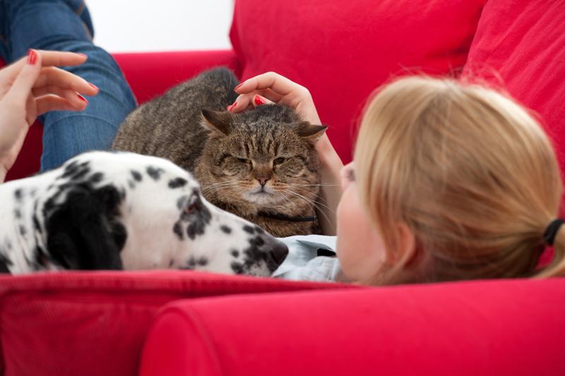 Perros y gatos hacen el duelo por su compañero muerto