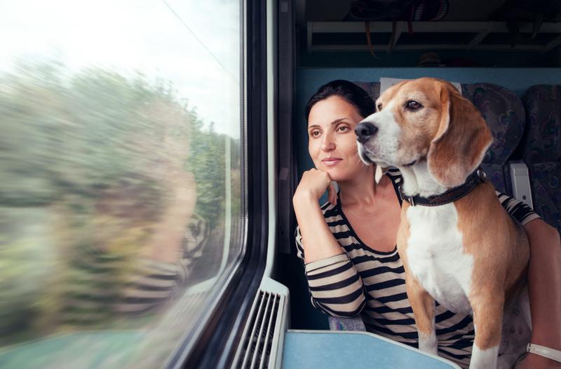 Viaje_perro