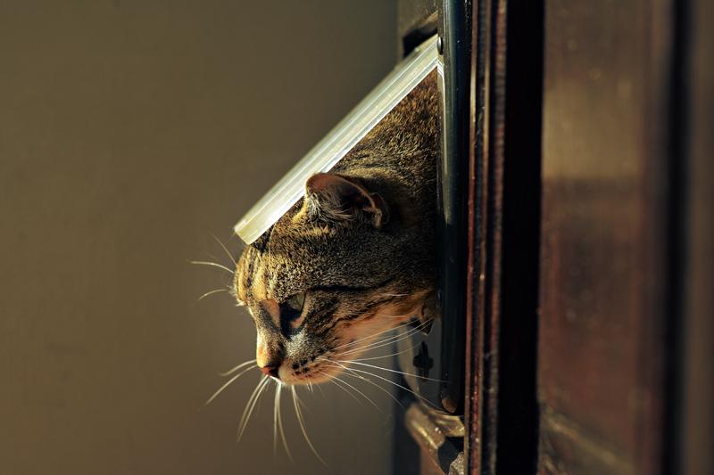 curiosidades-personalidad-gato