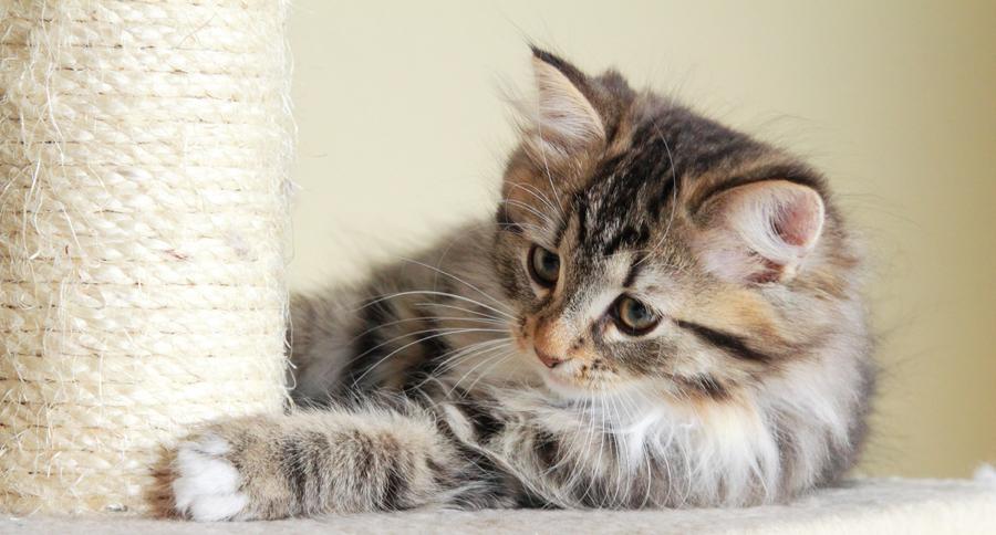 estrés-gato