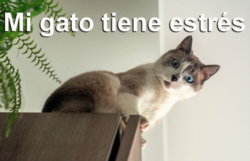 Gato-estrés