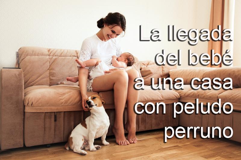 Bebé-casa-perro