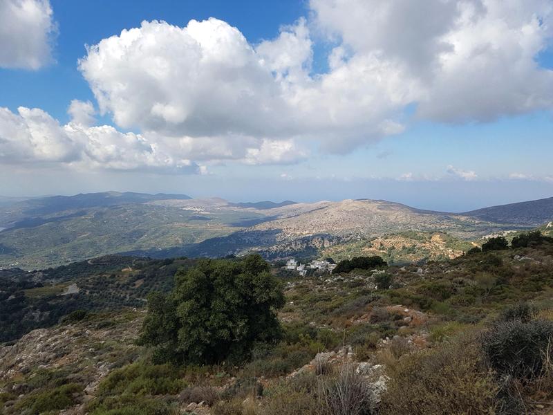 Los científicos identifican en Creta un ejemplar de gato salvaje que se creía extinguido