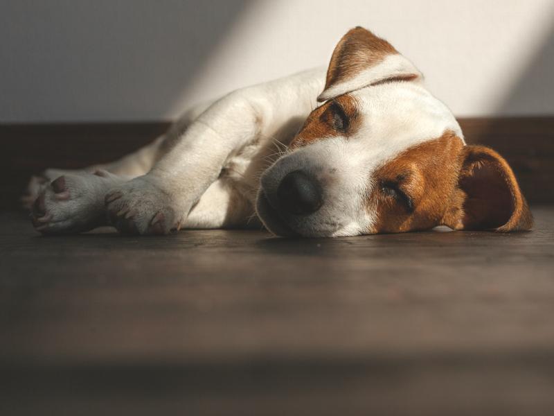 El estrés altera el sueño de los perros