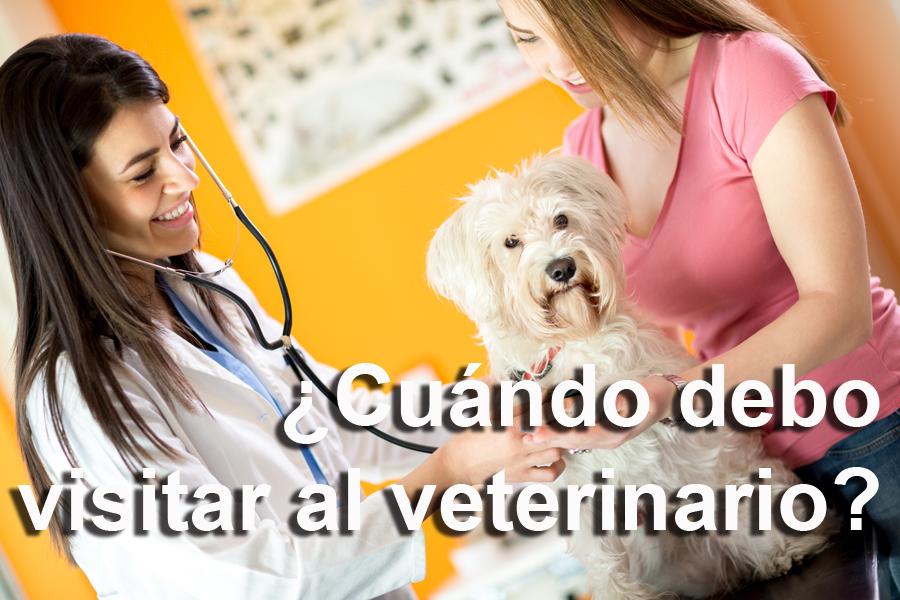 Visita-veterinario