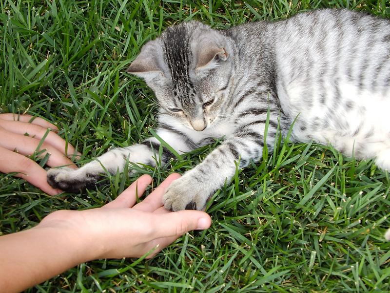 Pautas básicas del adiestramiento de gatos