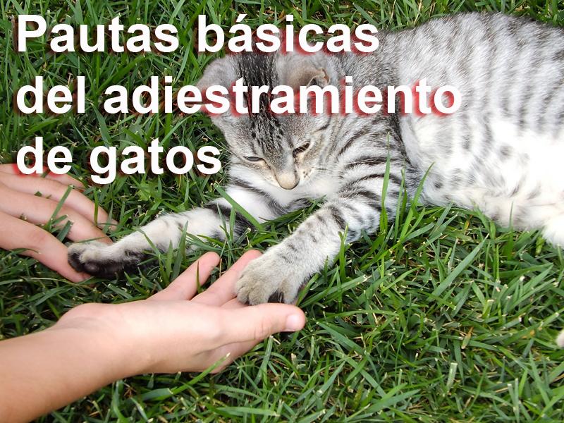 adiestramiento-gato