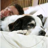 Dormir con mascota
