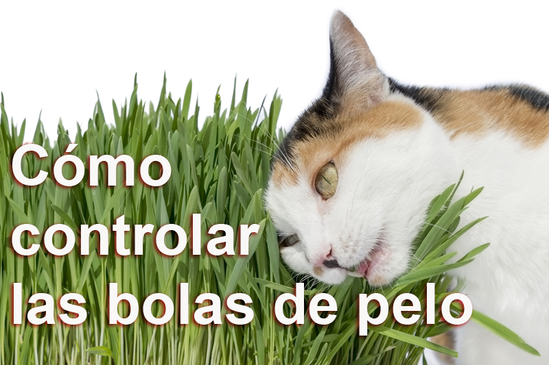 Gato-bolas-pelo