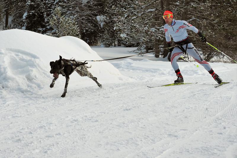 La prueba reina del Mushing sobre nieve de Catalunya se estrenó con éxito en Lles de Cerdanya