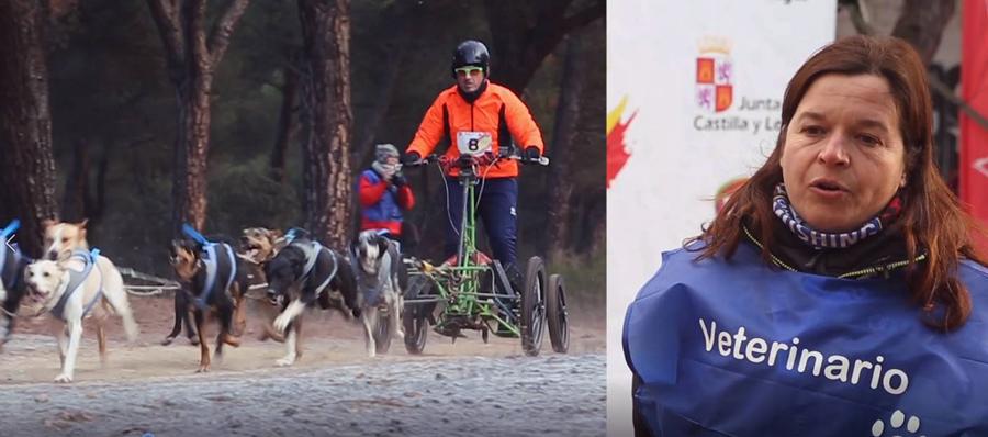 Servicios veterinarios del Campeonato de  España de Mushing
