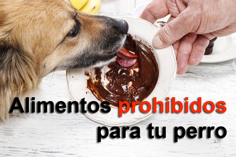 Alimentos-prohibidos-perro
