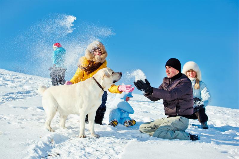 ¿Qué necesita tu peludo en la nieve?