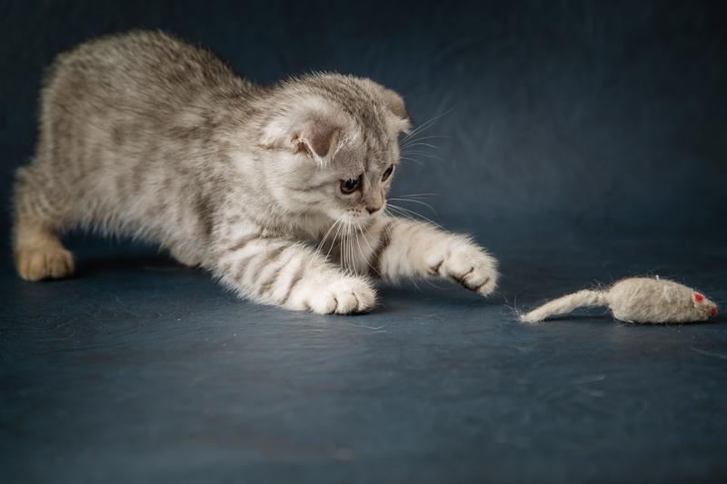 Los mejores juguetes para tu gato