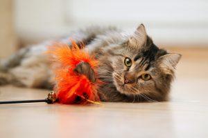 Juguetes-gato