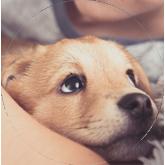 Cachorros-parvovirosis