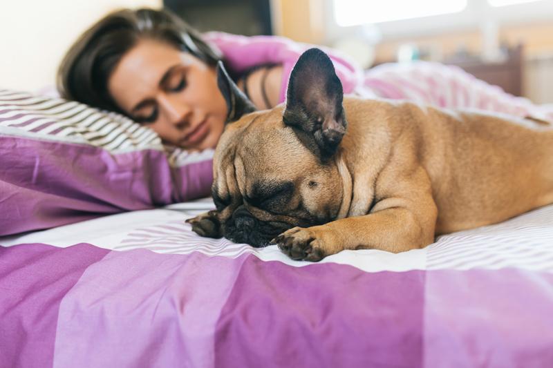 Los perros duermen igual de bien en la cama que fuera de ella