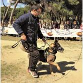 Perros-contra-violencia-género