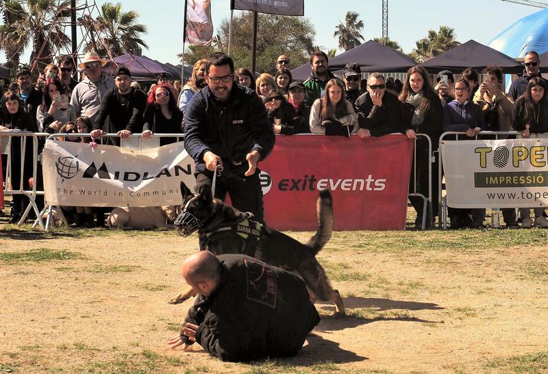 Perros contra la violencia de género