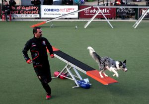 Summer-Agility-Competition
