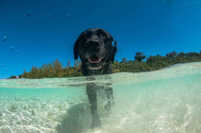 playas-perros_