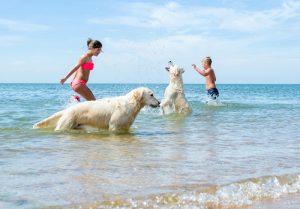 playas-perros_5