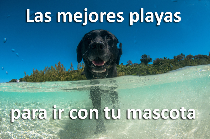 playas-perros