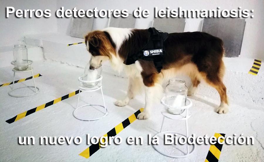 detectores-leishmania