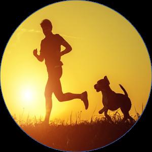 Artrosis-perro-prevención