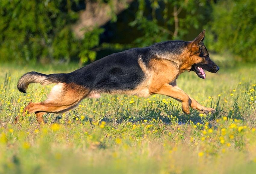 Artrosis en el perro: prevenir y mejorar los síntomas