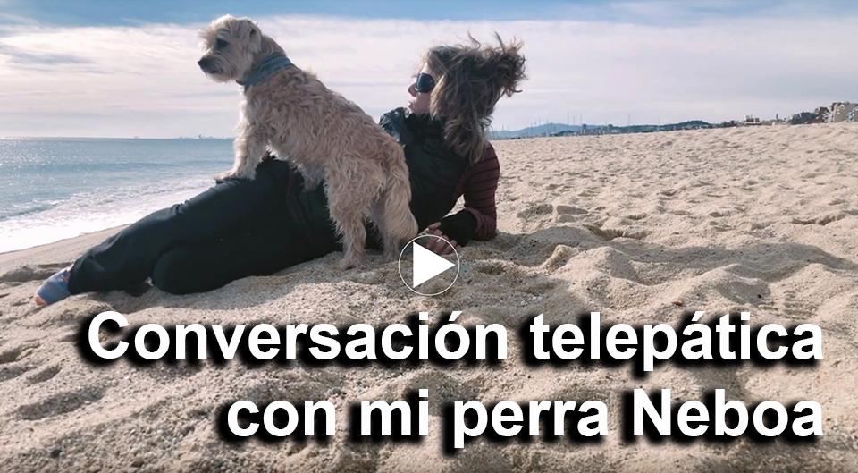 Conversaciones-perra-Neboa