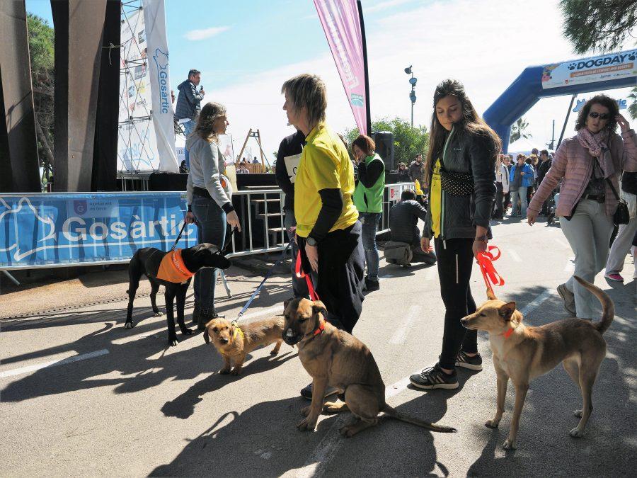 Todo a punto para la 3ª edición del Dog Day by Gos Àrtic