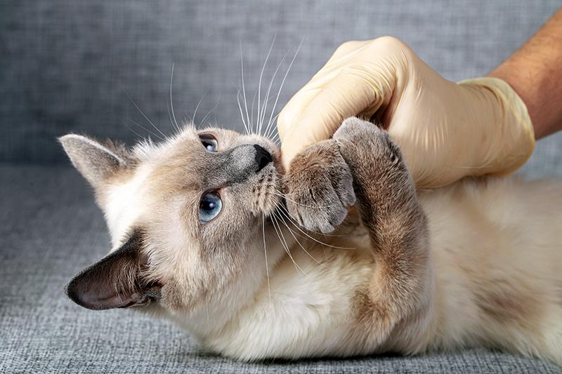 XV Jornadas EHNJ sobre Medicina Interna Felina Aplicada